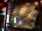 ライブラリー化石
