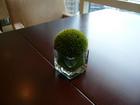 テーブル上植物