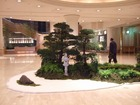 アフリカ会議用日本庭園