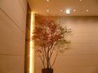 エレベータホール紅葉