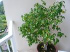 バルコニー観葉植物